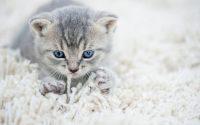 gatito masajeando con sus patas delanteras