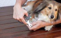 Cortar las uñas de tu perro.