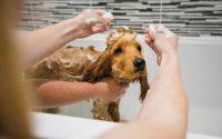 ¿Cómo lavar a un perro?