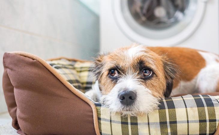 Perro escondido en la cesta por miedo.