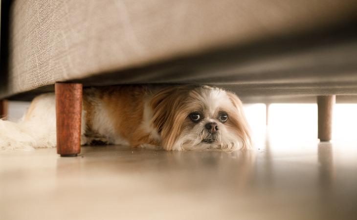 Perro escondido bajo la cama por miedo.