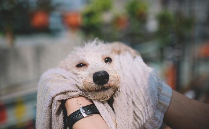 Perro secándose después de ser lavado.