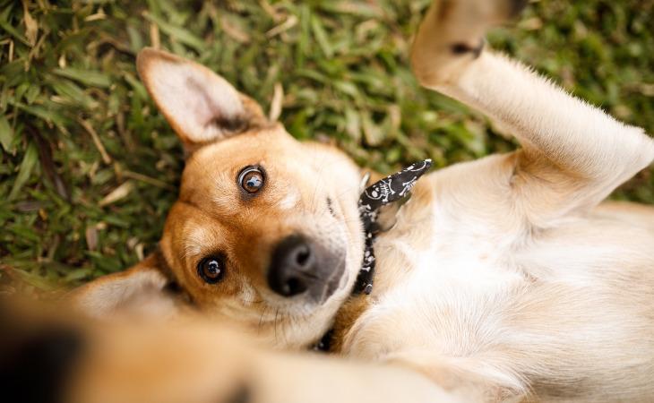Perro tumbado en el suelo
