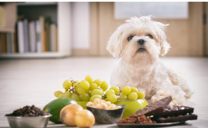 Las uvas, ya sean frescas o secas, son tóxicas para los perros.